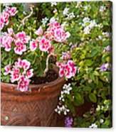 Bursting With Blooms Acrylic Print