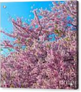 Bursting With Blossoms With A Hint Of Green Acrylic Print
