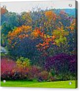 Bursting With Color 1 Acrylic Print