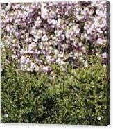 Bush With The Background In Cherry Klarenbeek Park In Arnhem Netherlands Acrylic Print
