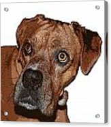 Buster Brown The Boxer Acrylic Print by Sandra Clark