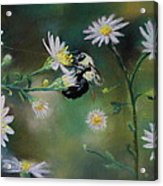 Busy Bee - Nature Scene Acrylic Print by Prashant Shah