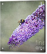 Busy Busy Bee Acrylic Print