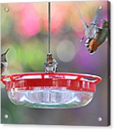 Busy Day At The Feeder Acrylic Print