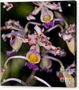Busy Orchids Acrylic Print