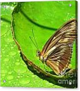 Butter On The Pond Acrylic Print