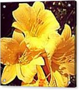 Butter Yellow Lilly Cluster Acrylic Print
