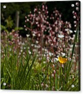 Buttercup And Wildflowers Acrylic Print