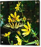 Buttered Up Acrylic Print