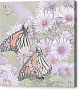 Butterflies And Bee Acrylic Print