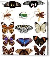 Butterflies And Beetles Acrylic Print