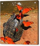 Butterflies And Turtle Acrylic Print