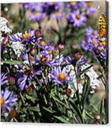 Butterflies And Wildflowers Acrylic Print