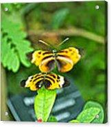 Butterflies Gentle Courtship  3 Panel Composite Acrylic Print