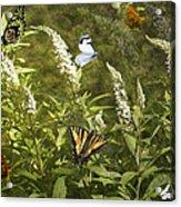 Butterflies In Golden Garden Acrylic Print