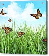 Butterflies In Tall Wet Grass  Acrylic Print