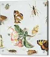Butterflies Moths And Other Insects With A Sprig Of Apple Blossom Acrylic Print