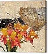 Butterflies Snd Flowers Acrylic Print