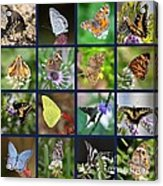 Butterflies Squares Collage Acrylic Print
