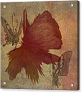 Butterflower Acrylic Print