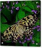 Butterfly - Yellow Green Purple Acrylic Print