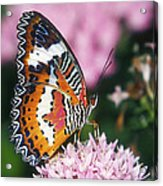 Butterfly 012 Acrylic Print