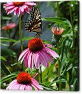 Butterfly 1 2013 Acrylic Print