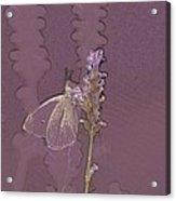 Butterfly 3 Acrylic Print