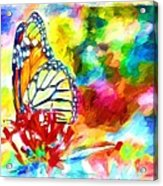 Butterfly Abstracted Acrylic Print