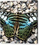 Butterfly Amongst Stones Acrylic Print