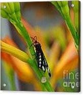Butterfly An3598-13 Acrylic Print
