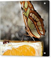 Butterfly And Ant Acrylic Print