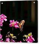 Butterfly And Azalea Acrylic Print
