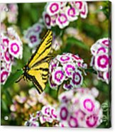 Butterfly And Blooms - Spring Flowers And Tiger Swallowtail Butterfly. Acrylic Print