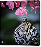Butterfly And Blossoms Acrylic Print