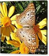 Butterfly And Daisies Acrylic Print