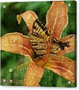 Butterfly And Lily Acrylic Print