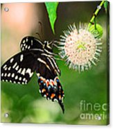 Butterfllies And The Crystal Balls Acrylic Print