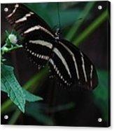 Butterfly Art 2 Acrylic Print