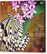 Butterfly Art - Hanging On - By Sharon Cummings Acrylic Print by Sharon Cummings
