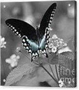 Butterfly Art Acrylic Print