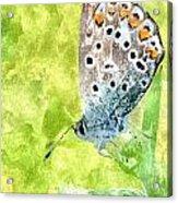 Butterfly Art Prints Acrylic Print