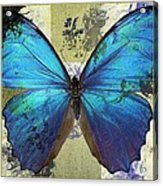 Butterfly Art - S01bfr02 Acrylic Print by Variance Collections