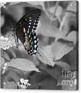 Butterfly Art Wings Together Acrylic Print