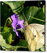 Butterfly At Flower Acrylic Print