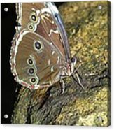 Butterfly At Night Acrylic Print