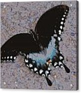 Butterfly At Rest Acrylic Print