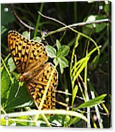Butterfly At Signal Mountain Acrylic Print