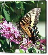 Butterfly At Work Acrylic Print