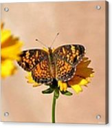 Butterfly Baby Acrylic Print